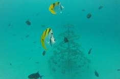 Maldives trip - snorkeling