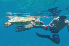 Maldives vacation - snorkeling with turtles