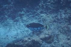 Maldives, Huraa, snorkeling