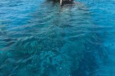 trips-maldives